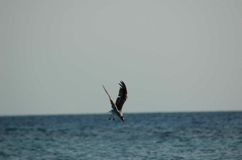 Bird Diving.jpg
