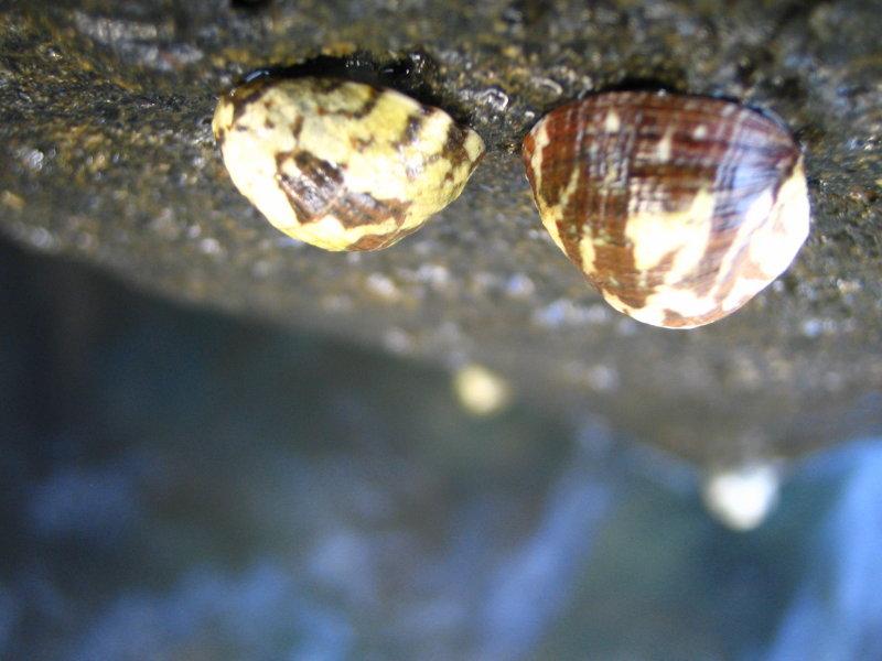 Shells 2.JPG
