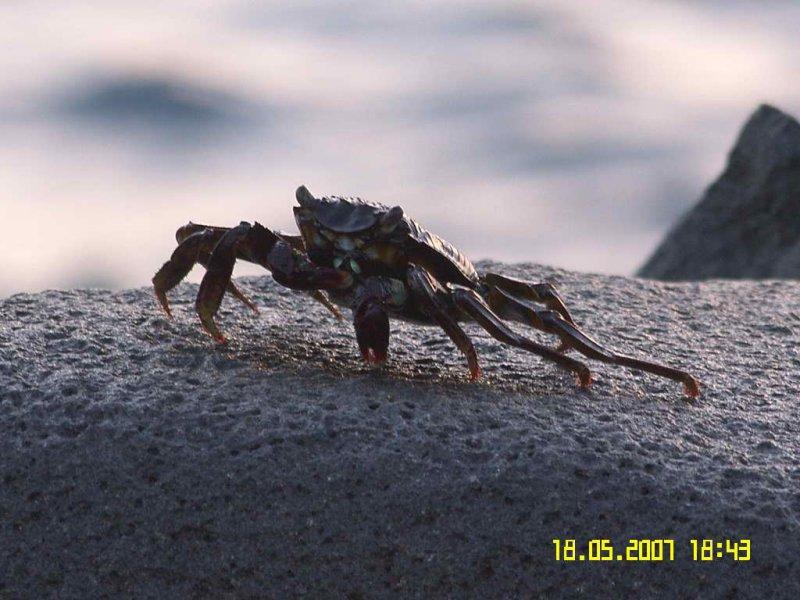 Crab-2.jpg
