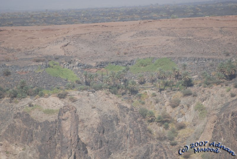 Palm trees at edge of crater and lava fields in bg.jpg