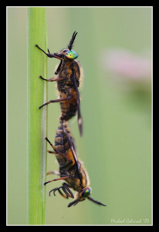Flies...