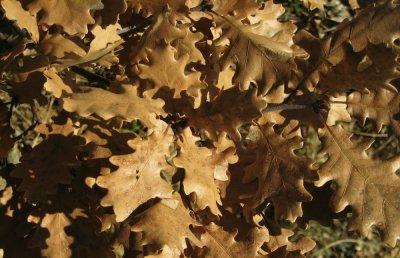 feuilles<br><b>leaves</b>