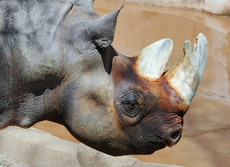 Ugly Rhino