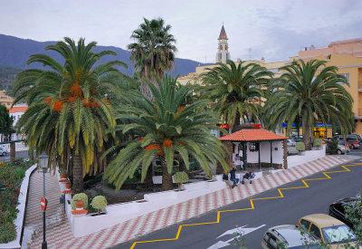 El Paso Palms