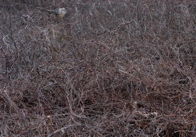 Wheres Bambi? 2   39