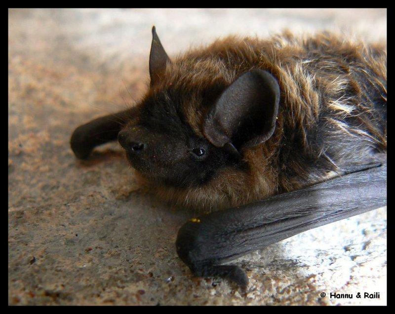 P1170577 Bat 7.jpg