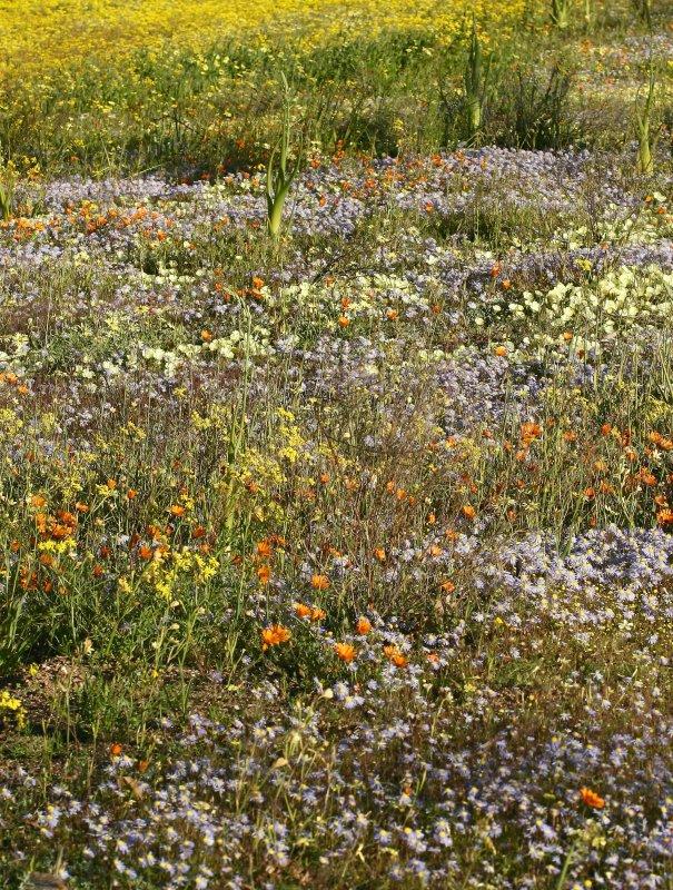 Wildflower meadow2