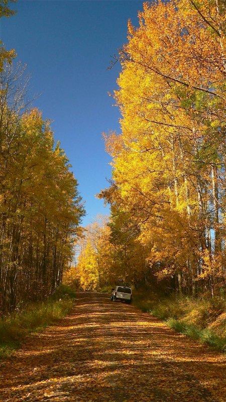 Autumn splendour.jpg
