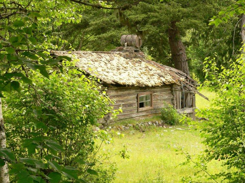 Mossy cabin near Bella Coola,B.C.