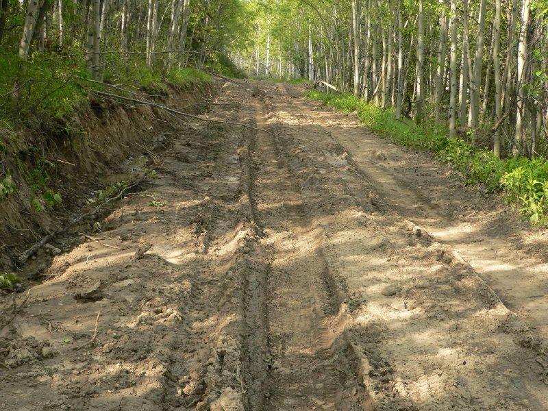 Tsuniah mud.jpg