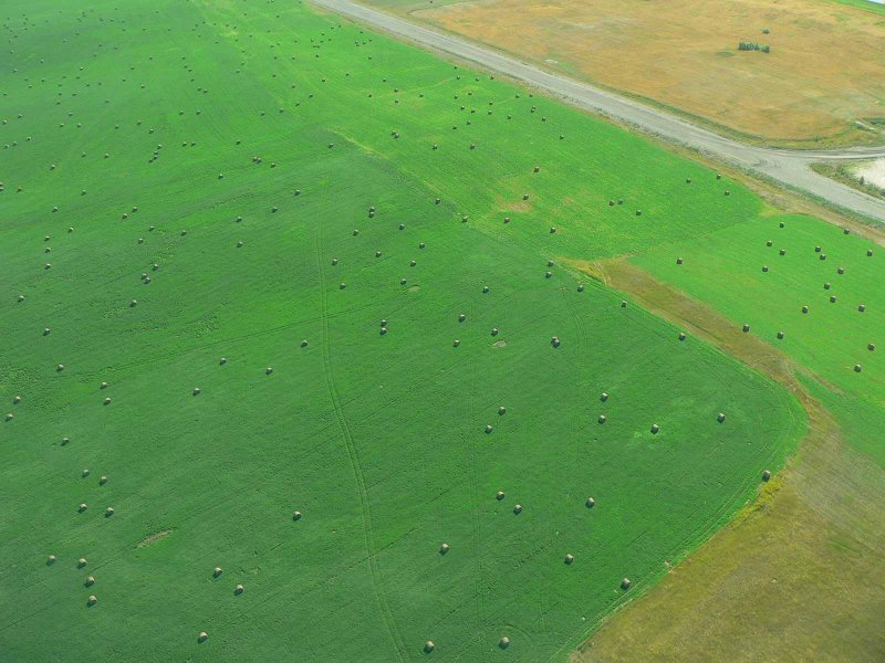 Bales, near Wabamun.jpg
