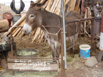 Donky or burro