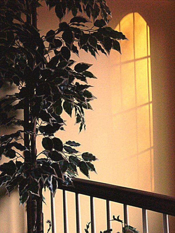 afternoon sun~ December 9th