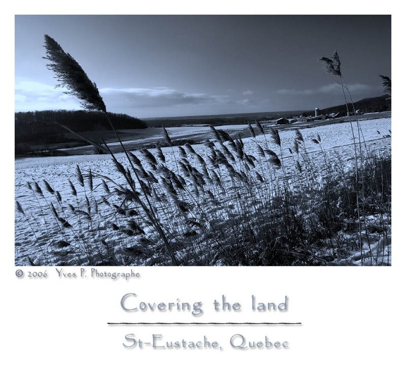 Covering the land ...