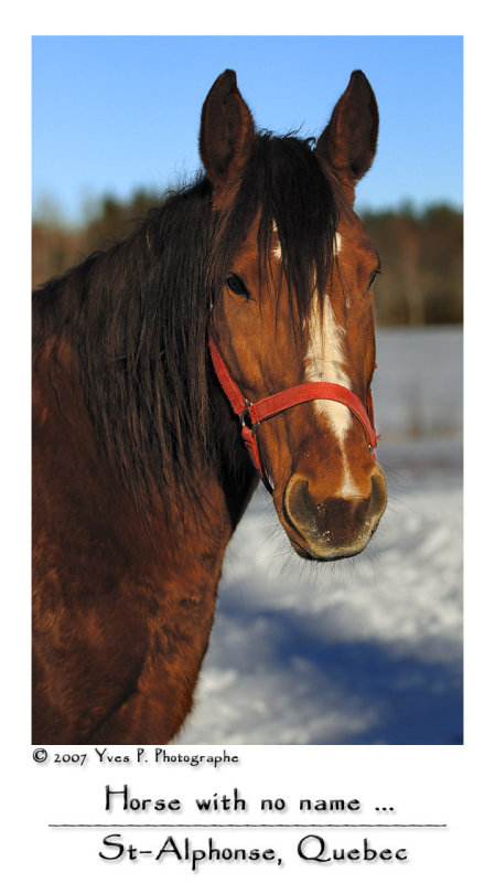 Horse with no name ...