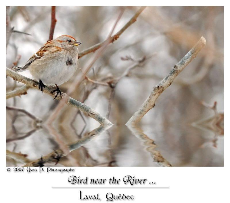 Bird near the River ??