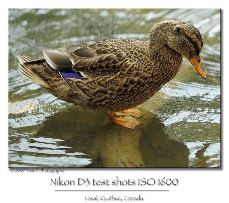 DSC_4594.jpg
