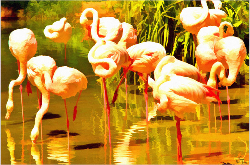 Flamingos Feeding-London Zoo.jpg
