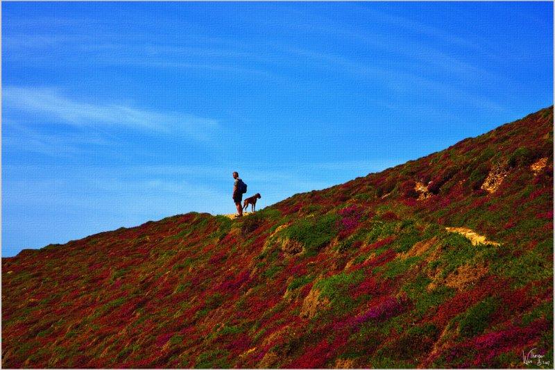 One Man  & His Dog- Cornwall 2006.jpg