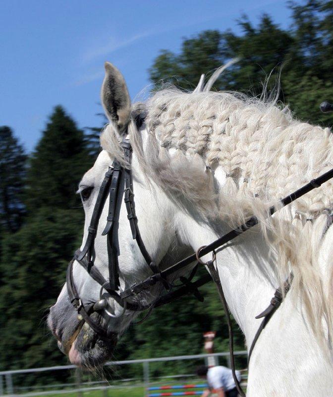 Irland-Pony