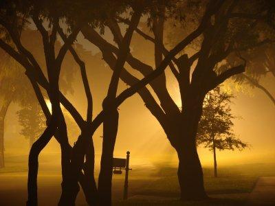 Fog and Diffuse Light