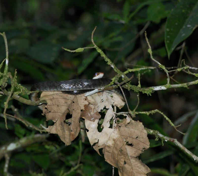 Jungle trip 2 19.jpg