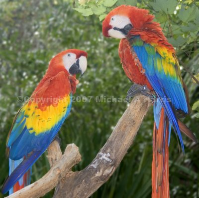 Parrots at the Brevard Zoo