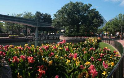 Floral display at EPCOT