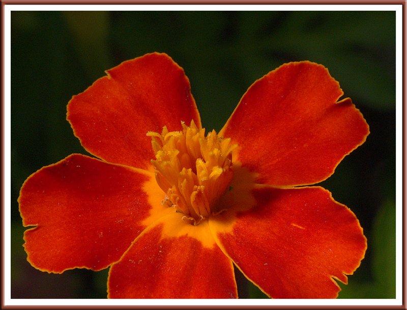 July 23 - Velvet Petals