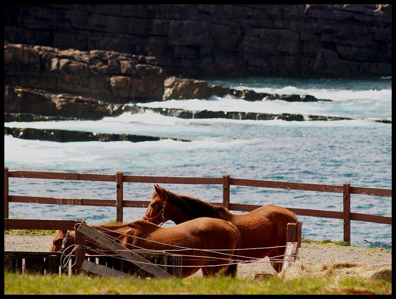 HorsesNearOcean43309.jpg