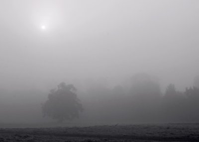 Misty Morning At Nonsuch Park, Cheam Surrey.