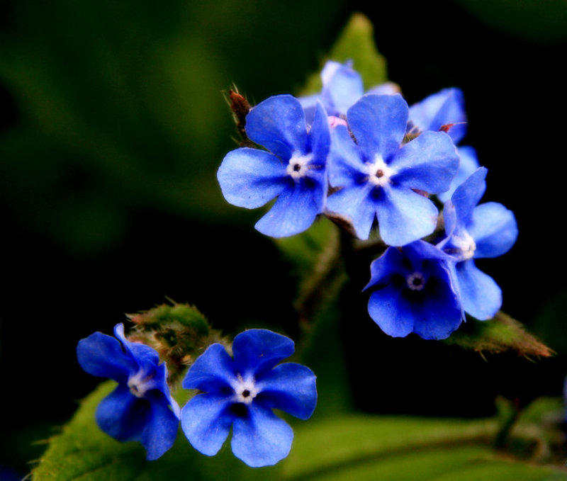 8 May - Forget me Not?