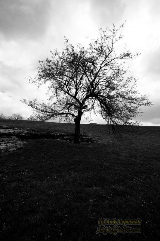 Lone tree in Kansas City