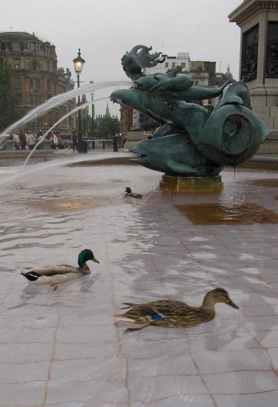 Ducks in the fountain