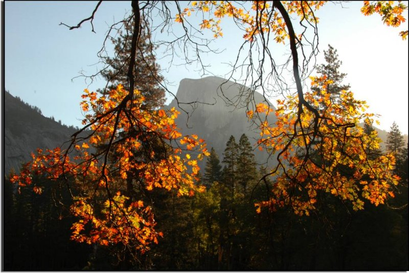 Half Dome Framed by Oak Branches