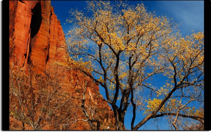 Color in Zion Canyon