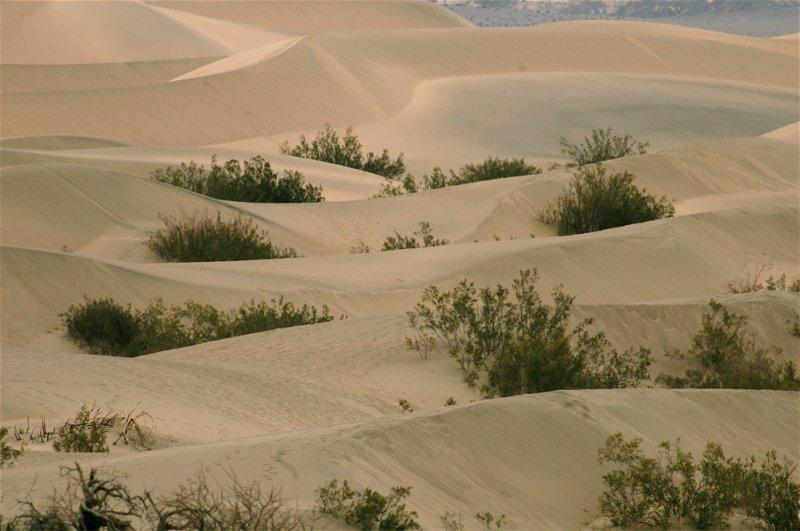 Sand Dunes Under Soft Light - #2