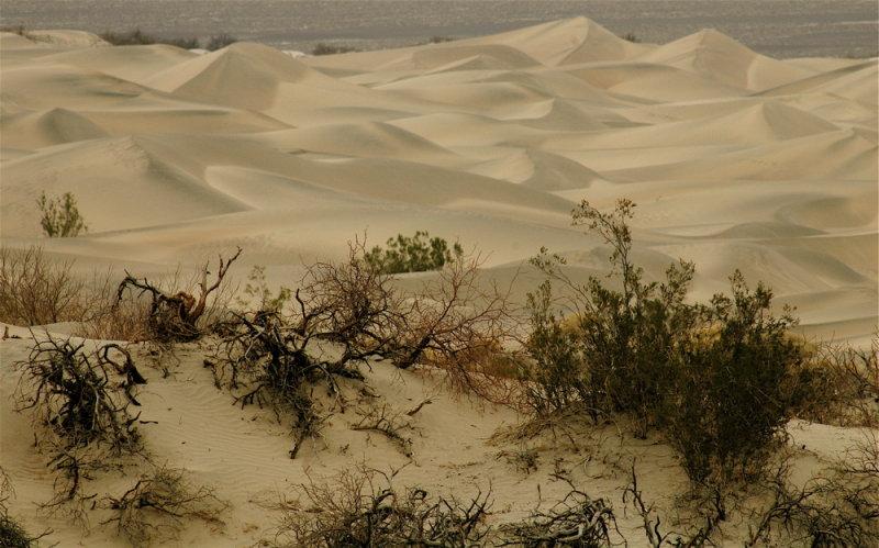 Sand Dunes Under Soft Light