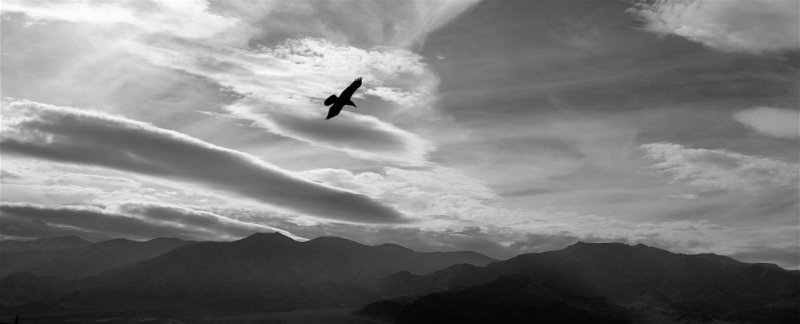 Raven Over Death Valley