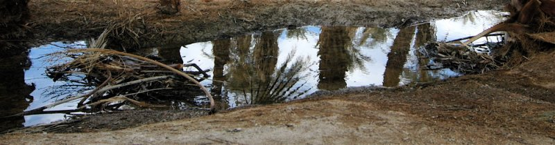 Palms in Reflection