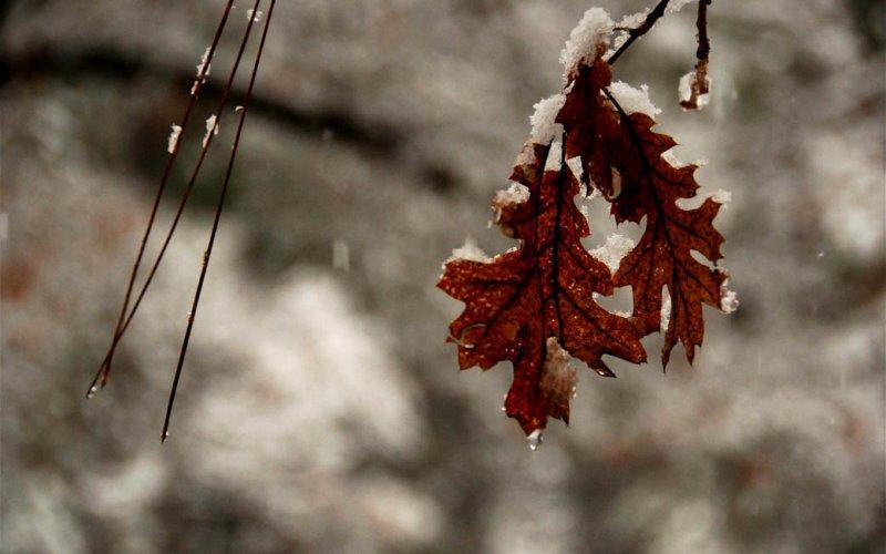 Oak Leaves and Pine Needles