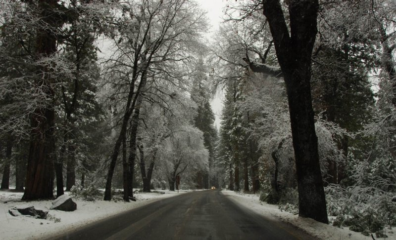 Along Northside Road - When A Color Photograph is Black and White