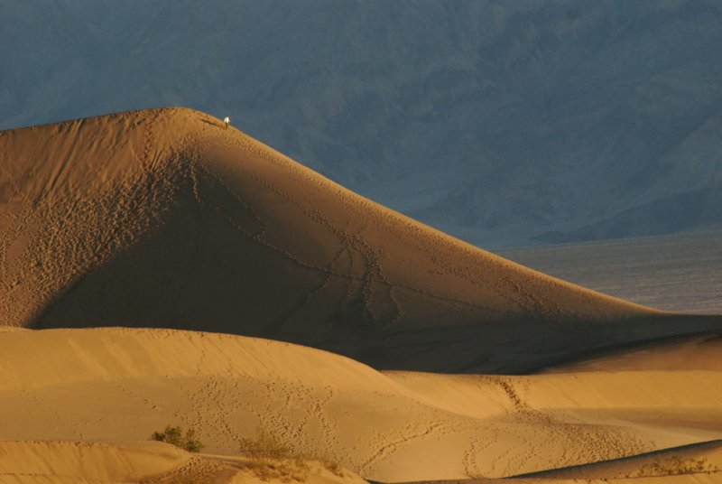 Small Person, Large Dune