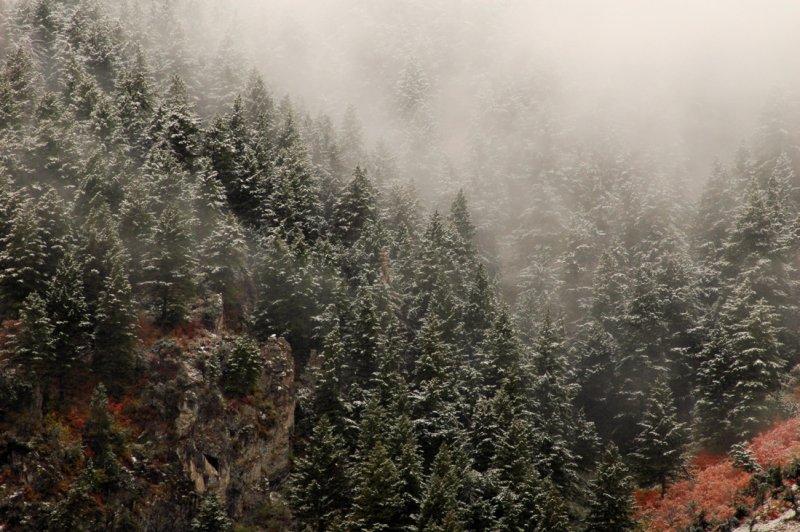 Snow Scene Along Highway 89, Near Wellsville, Utah