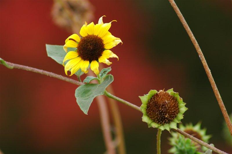 Flowers in Bear Valley, Utah