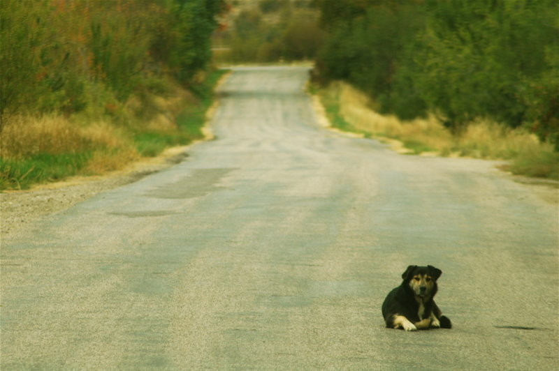 Dog on Mink Creek Road, Utah