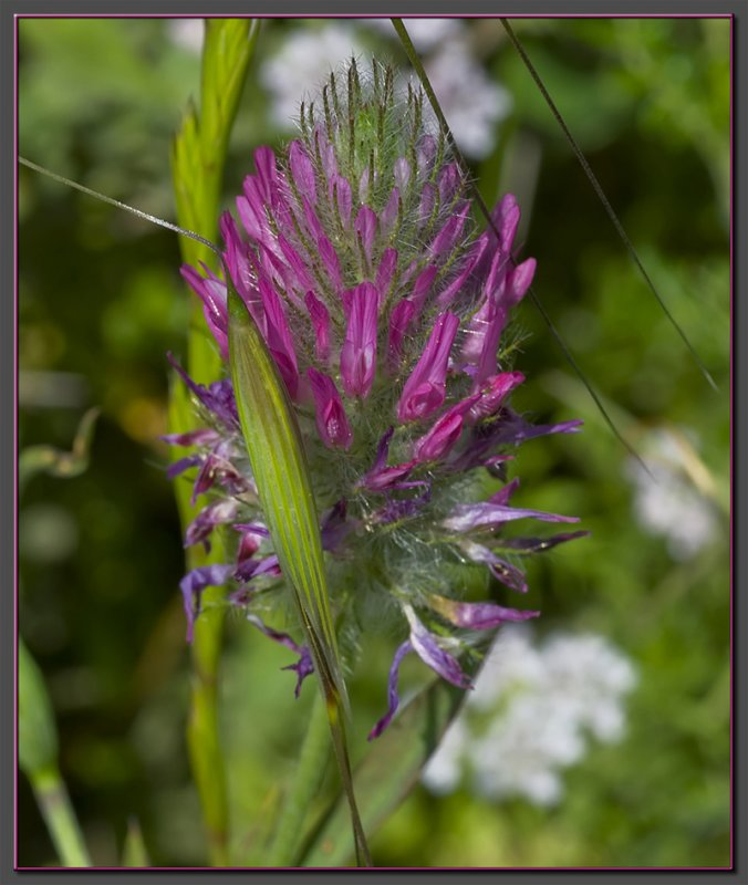 A purple composition