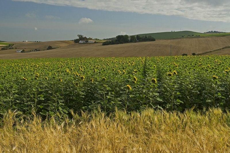 Zahara area view