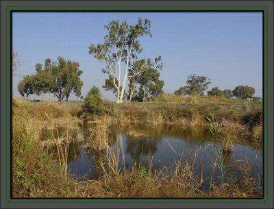 The buffalo hidden pond