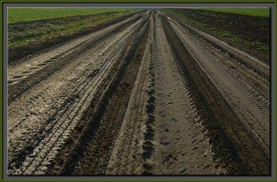 Muddy trails.jpg